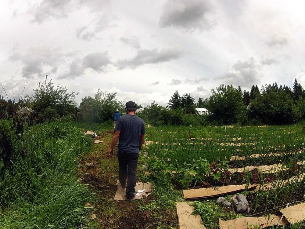 Purple Frog Gardens
