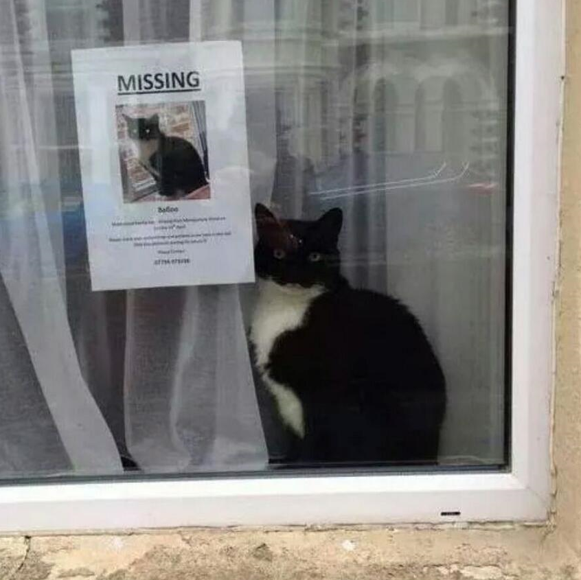 Here is a picture I took of a missing cat poster in Worthing. A big map would miss smaller details like this. Aren't you glad I included this picture? Hasn't it made your day so much better?