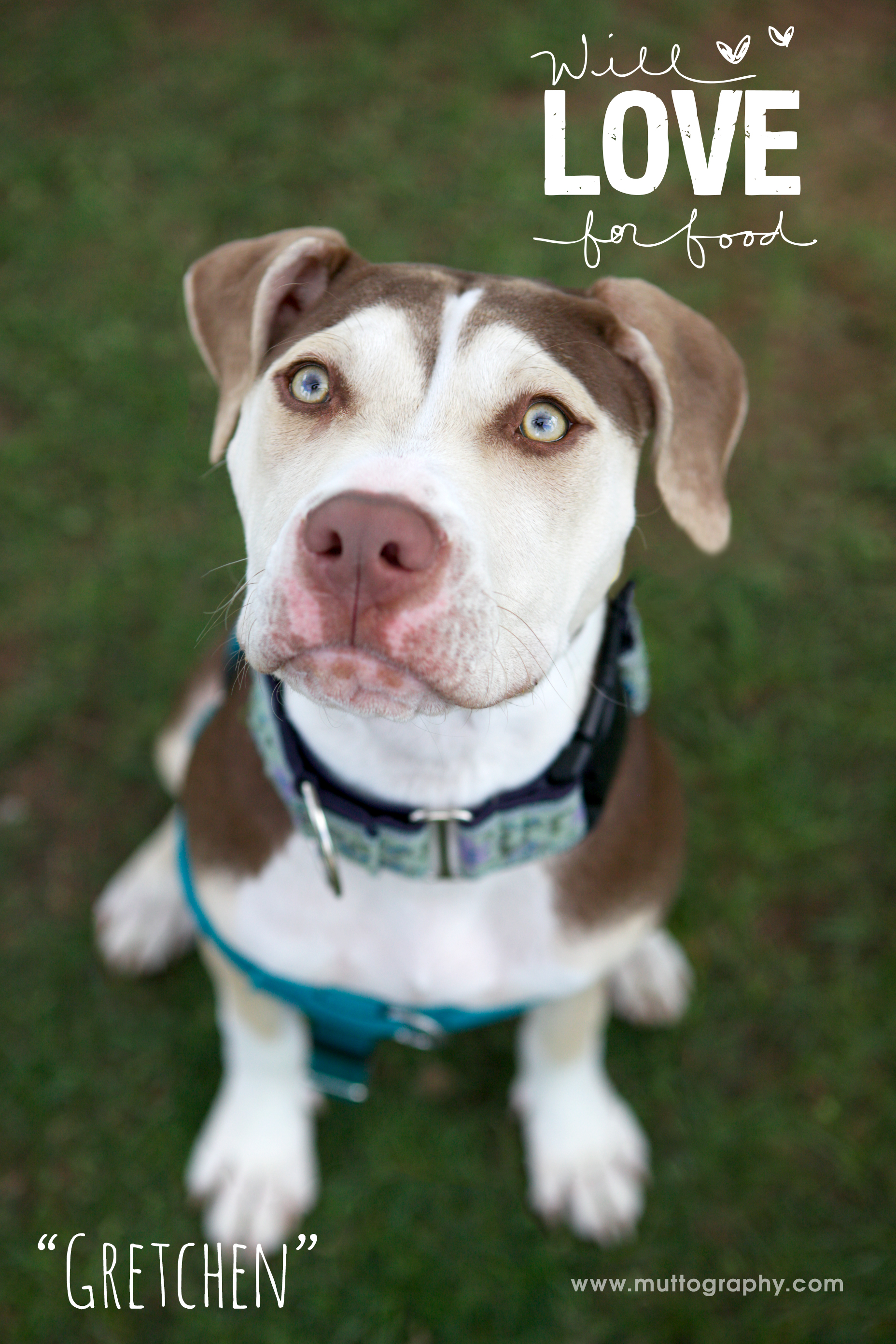 7 months old and looking for love in all the right places! For more info on Gretchen and our other available pups, please go to our   adoptable   page. This beautiful photo courtesy of   Muttography  .