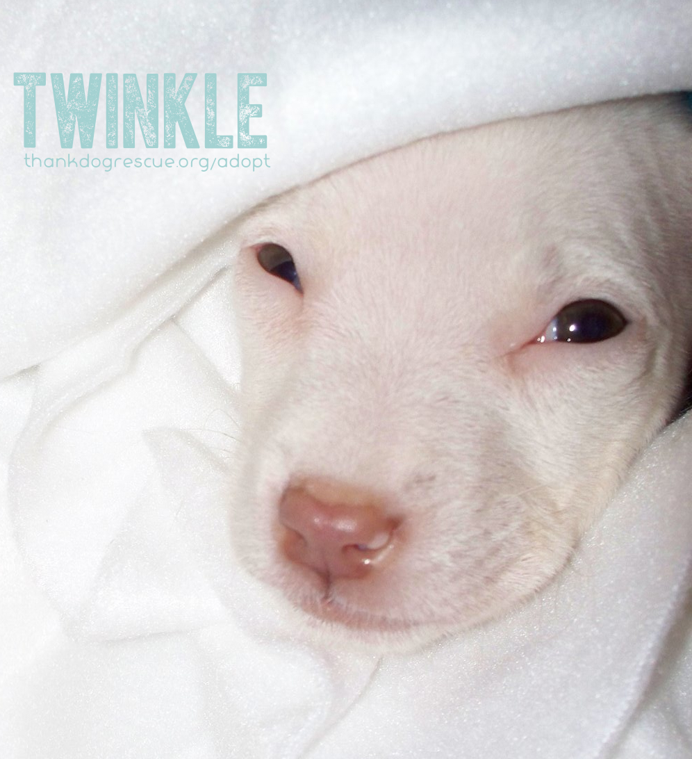 21 Twinkle.jpg