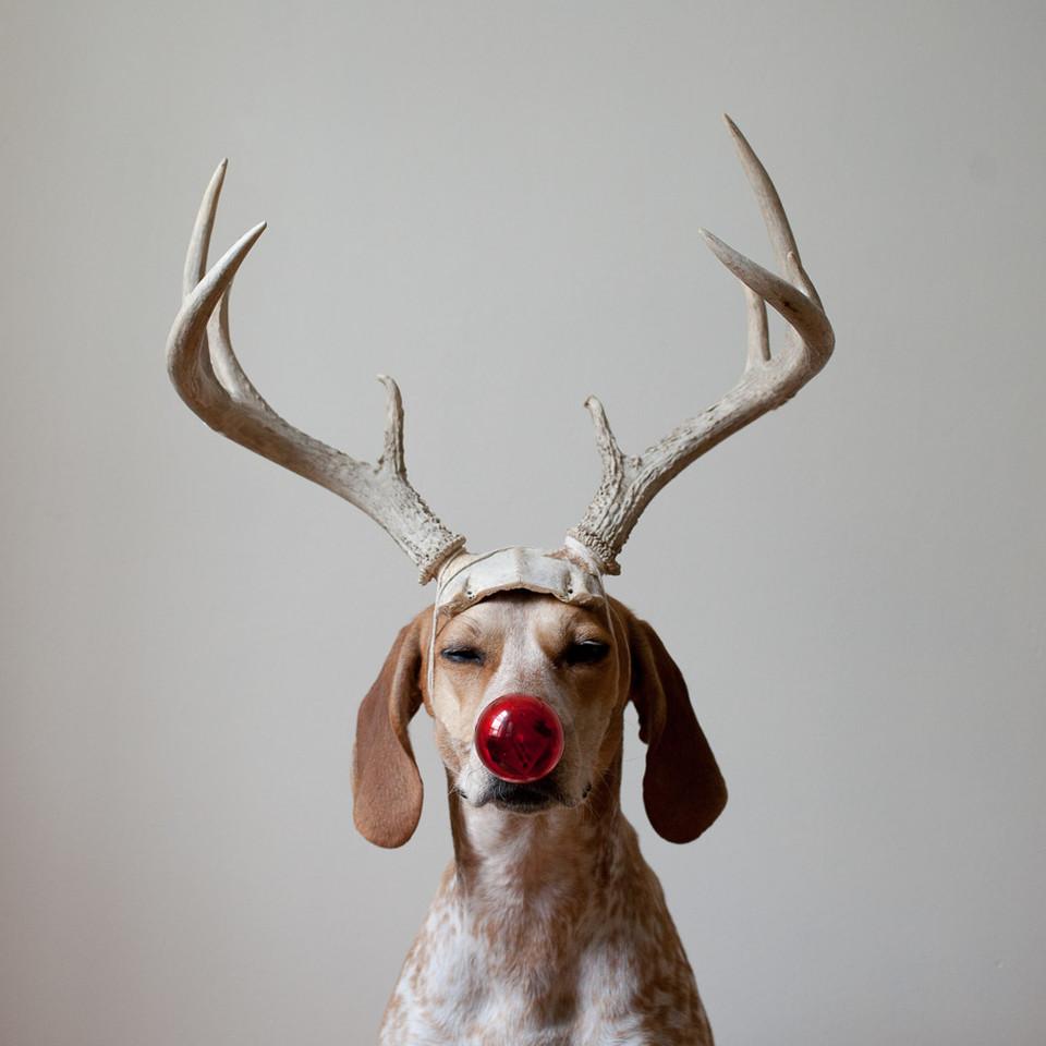 Maddie_Deer2.jpg