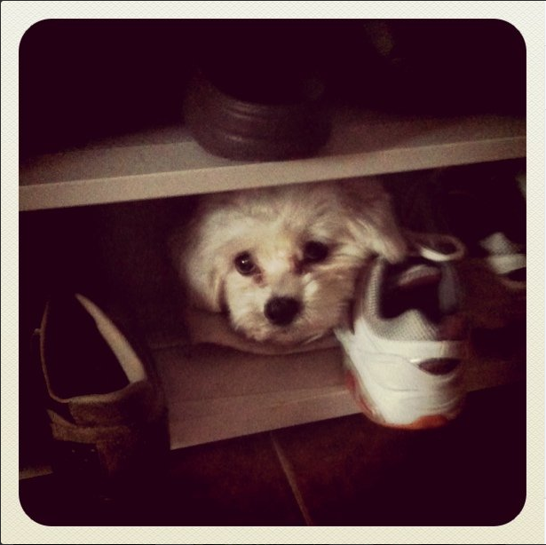 hiding in shoe cabinet