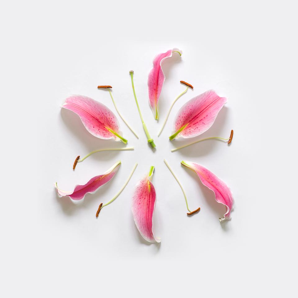 Lily-Exploded-02-portofolio-rag-A3.jpg