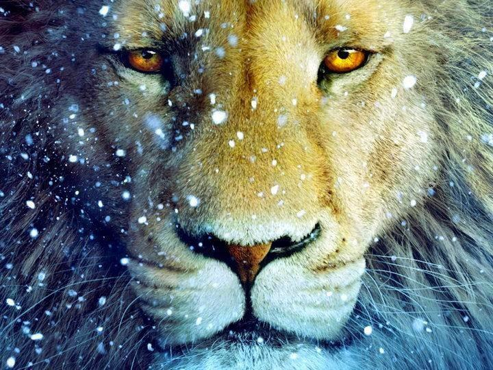 lion_master.png