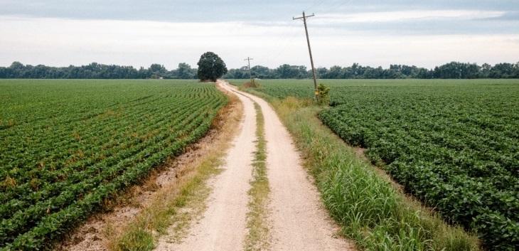 corn road to cemetery.jpg