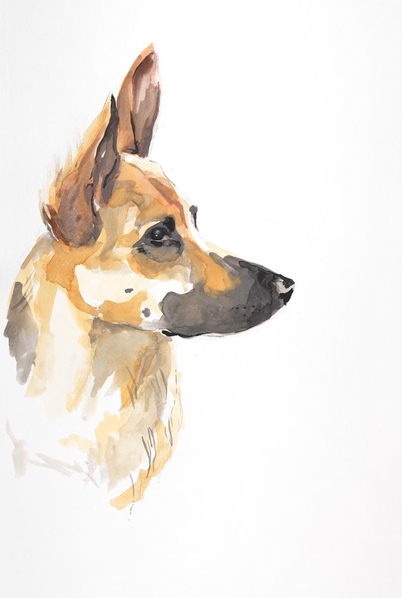winston III. watercolor + pencil. By Lauren Carlson Walcott