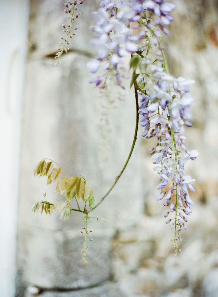 Wisteria hangs outside Normandy chateau; Sylvie Gil Photography