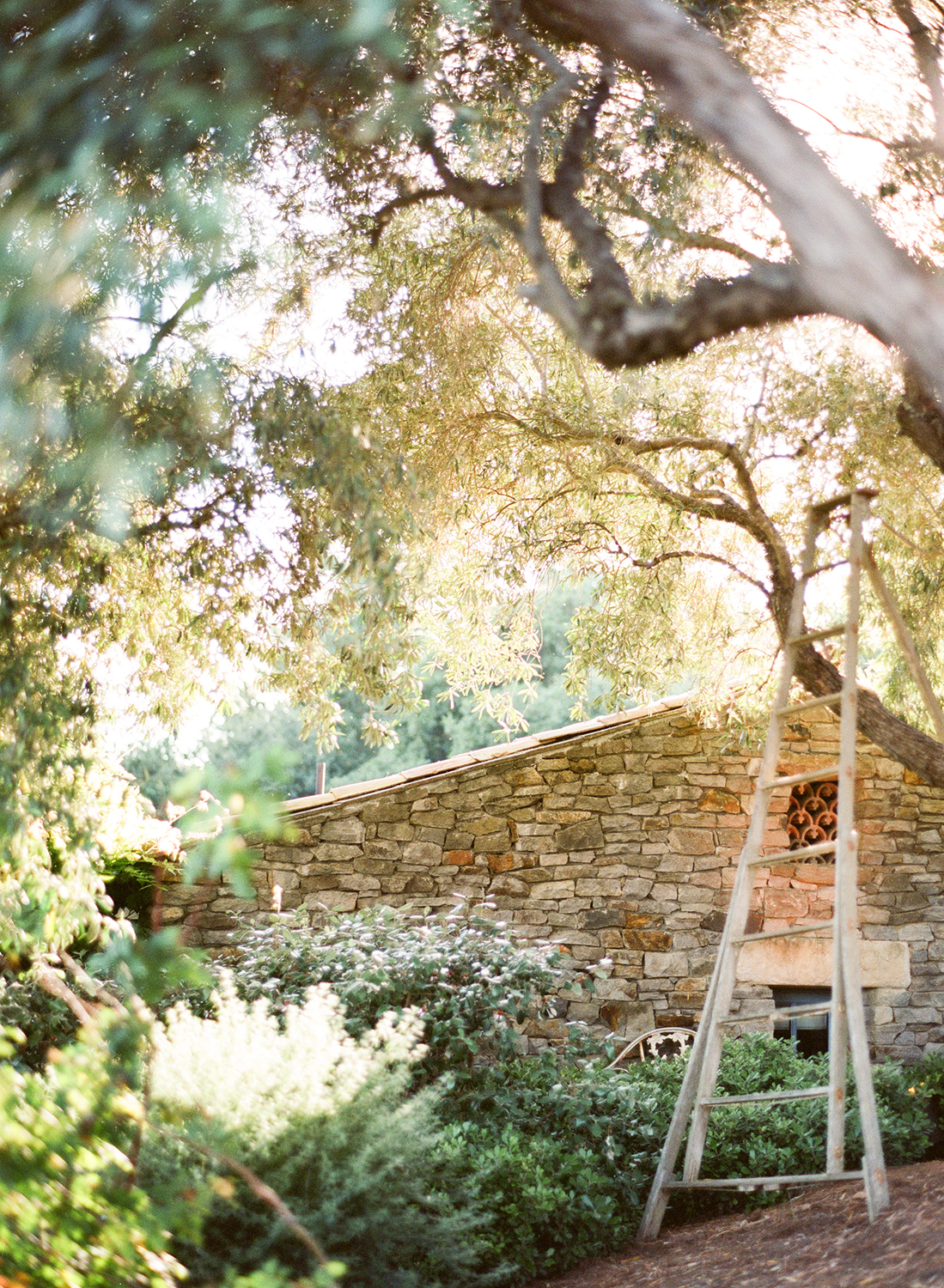 A ladder bathed in warm afternoon sunlight adds a charming rustic accent to the venue; photo by Sylvie Gil