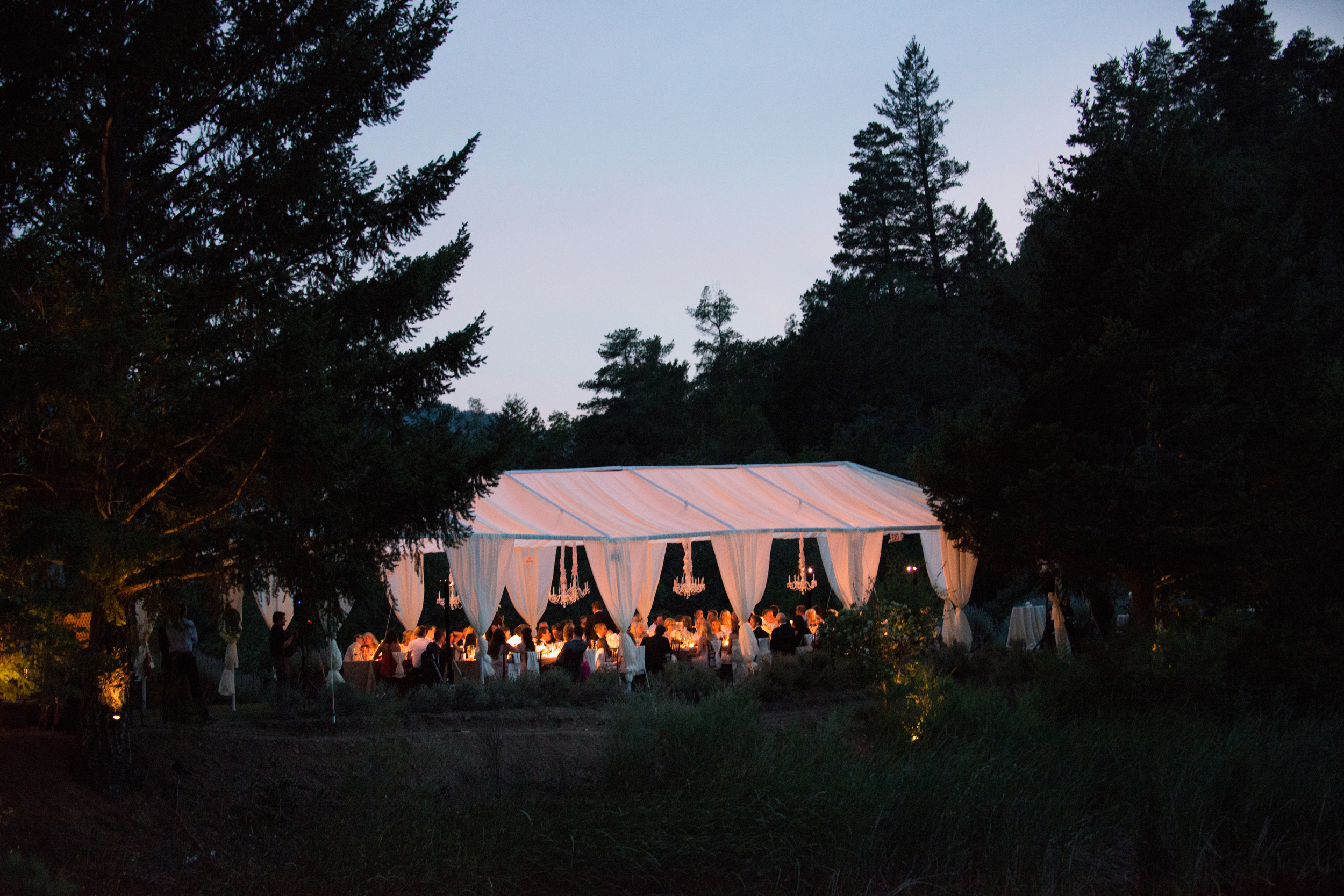 The outdoor reception continues into the night, the sunset framed by tall pines in Calistoga; photo by Sylvie Gil