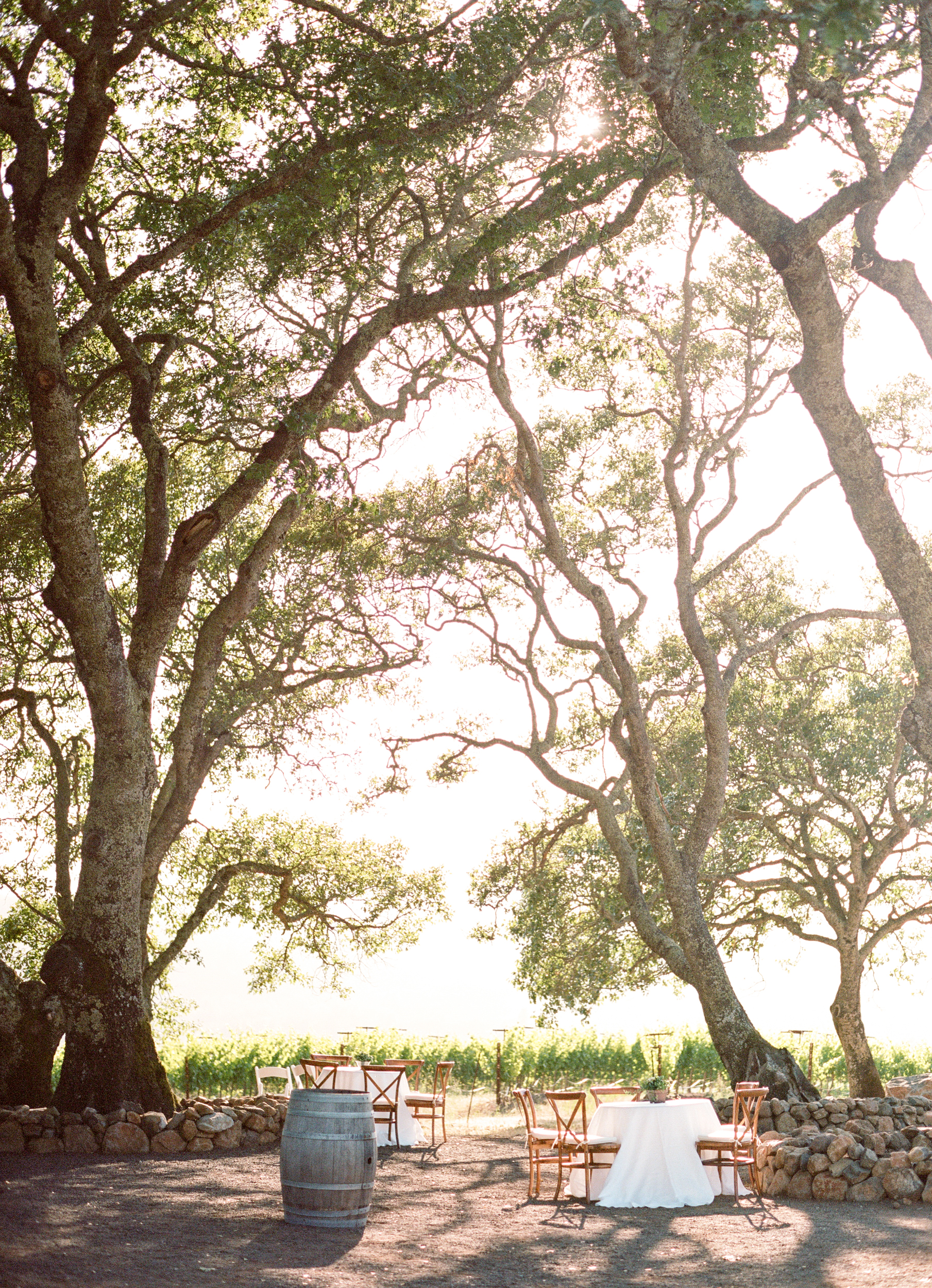 Tables with flowing white tablecloths are set up beneath towering oaks next to a vineyard for the reception; photo by Sylvie Gil