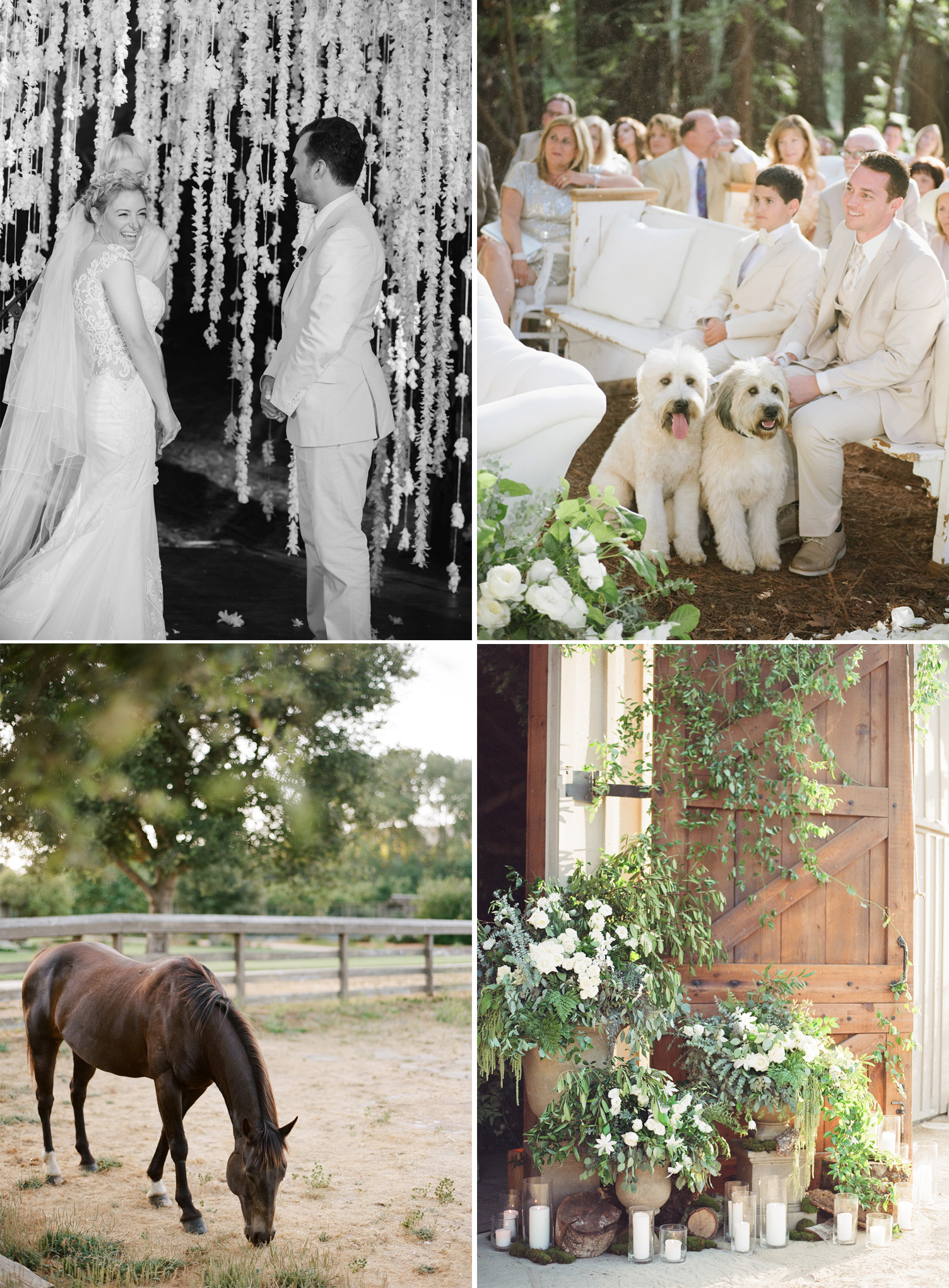 The bride giggles during the ceremony, guests watch the two get married with the labradoodles, a horse grazes on the ranch, foliage-heavy florals decorate the entrance to the barn with candles and cut logs; photos by Sylvie