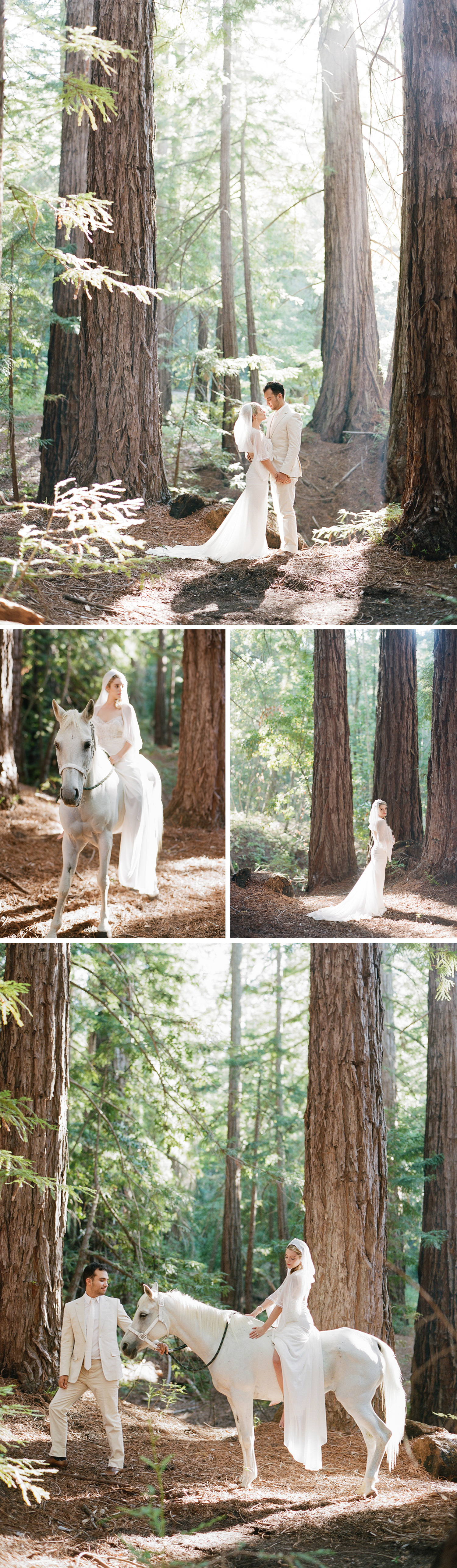 The bride and groom during a romantic couple session in the redwood forest; the bride sits bareback atop a white horse; photos by Sylvie Gil