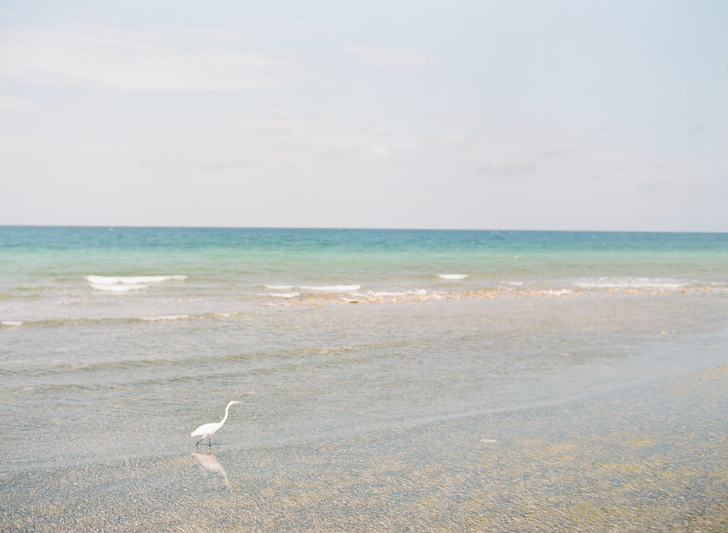 Stork in the ocean along the beach in Montego Bay, Jamaica