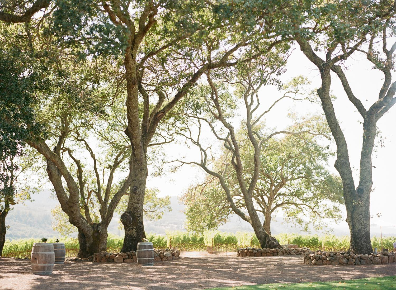 Oak trees at Kunde Winery, Napa Valley; Sylvie Gil Photography