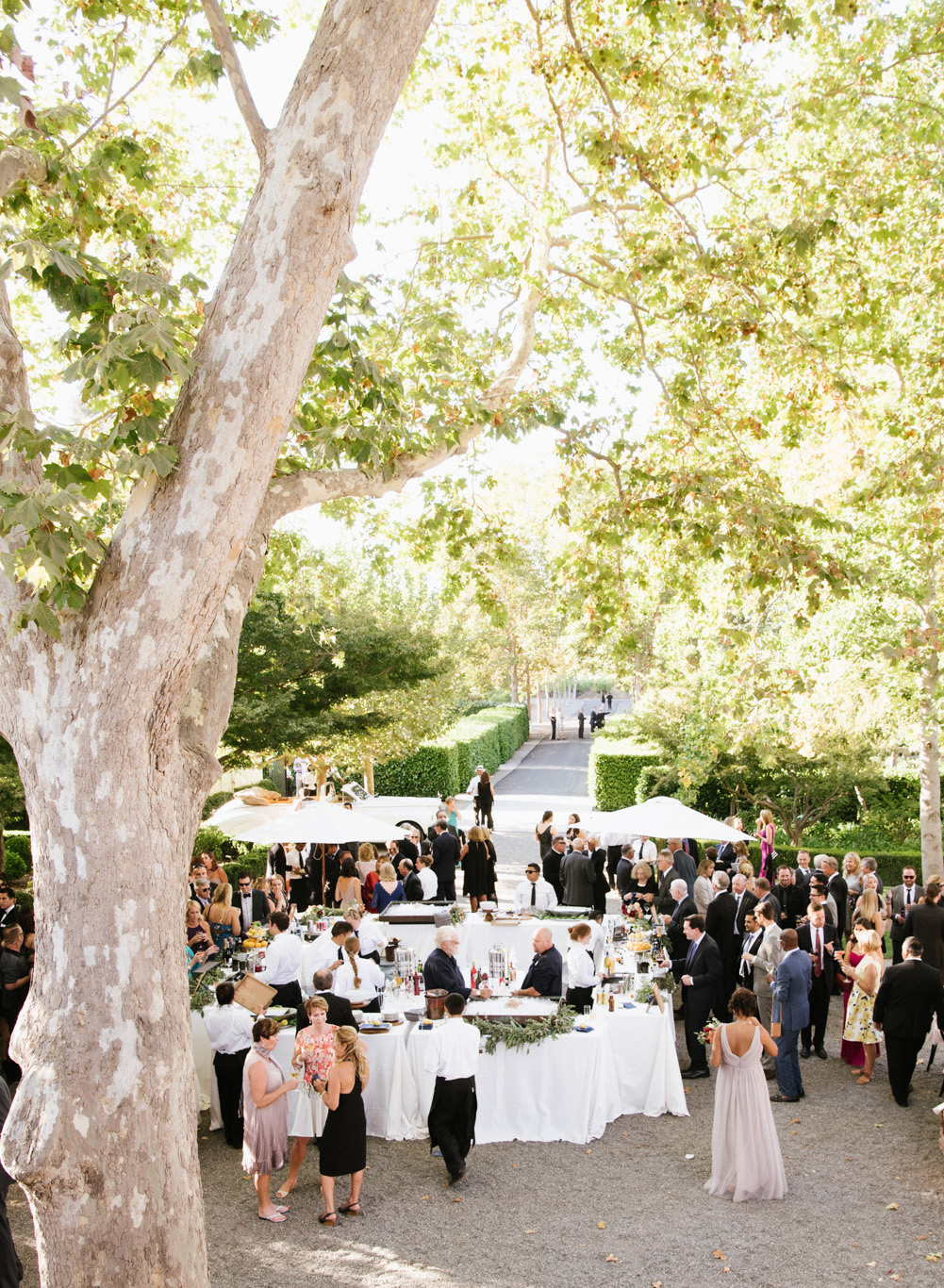 Guests mingle over cocktails after a wedding ceremony at Beaulieu Gardens in St. Helena wine country; Sylvie Gil Photography