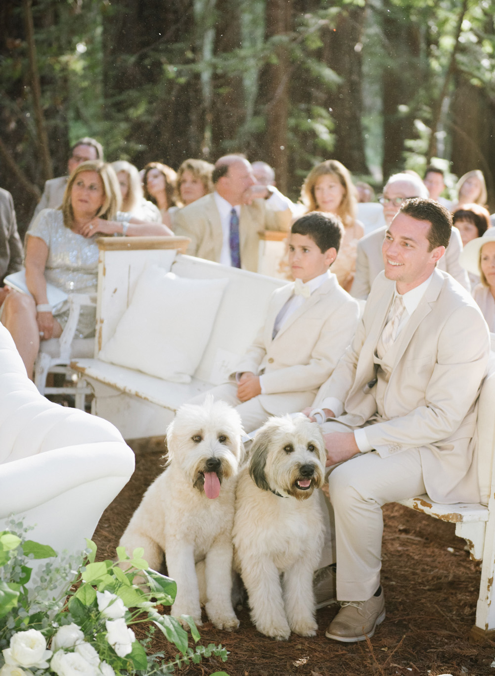 Guests and labradoodles seated for a ceremony among the central coast redwoods; Sylvie Gil Photography