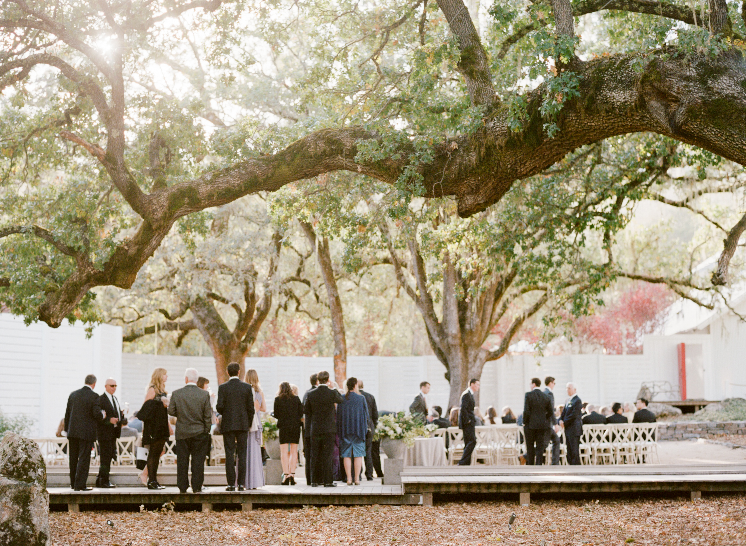 Guests arrive for a wedding ceremony under the oak trees in St. Helena, California; Sylvie Gil Photography