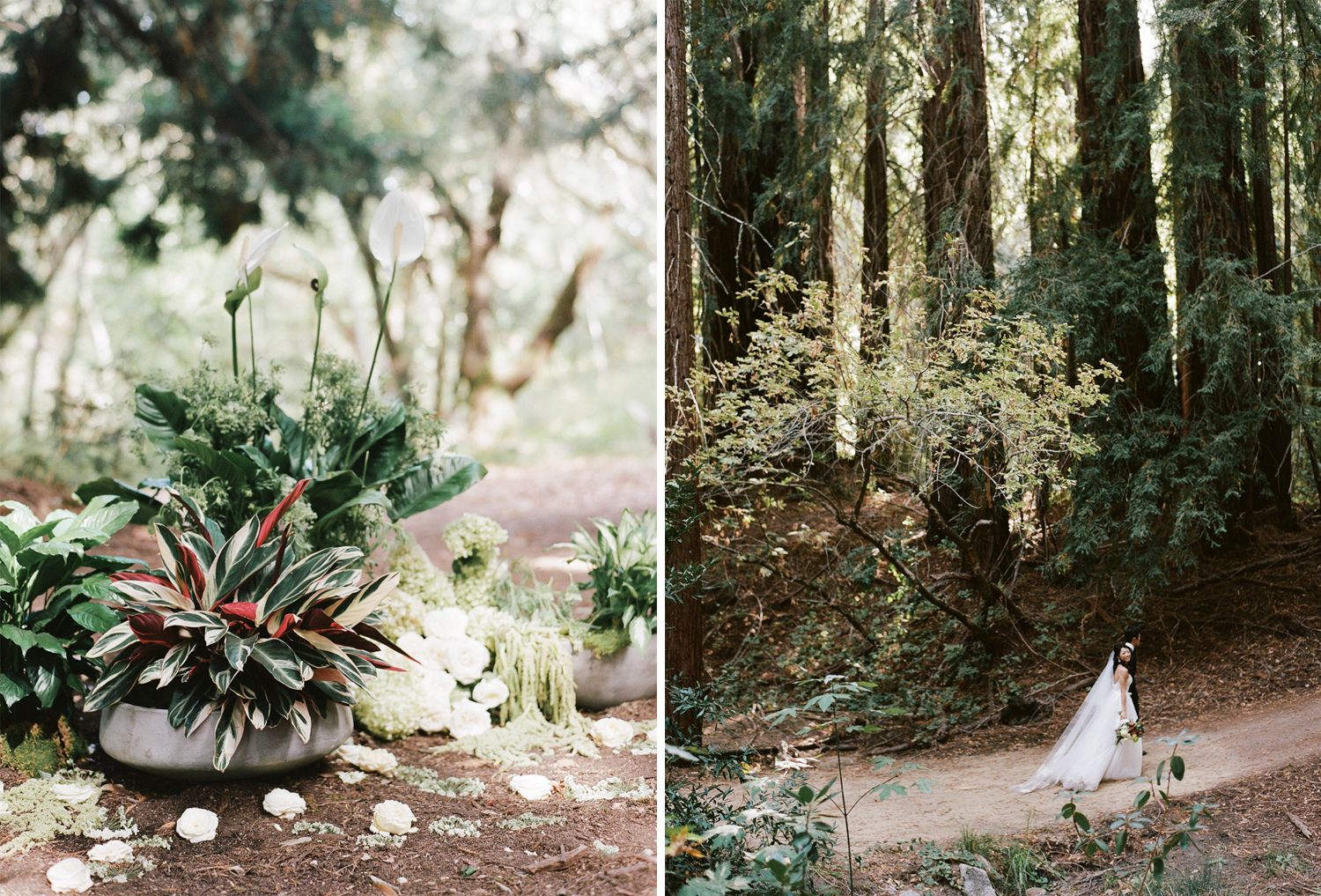 Lilies and ferns in concrete planters decorate a redwood forest wedding ceremony in the Central Coast of Califonia; Sylvie Gil Photography