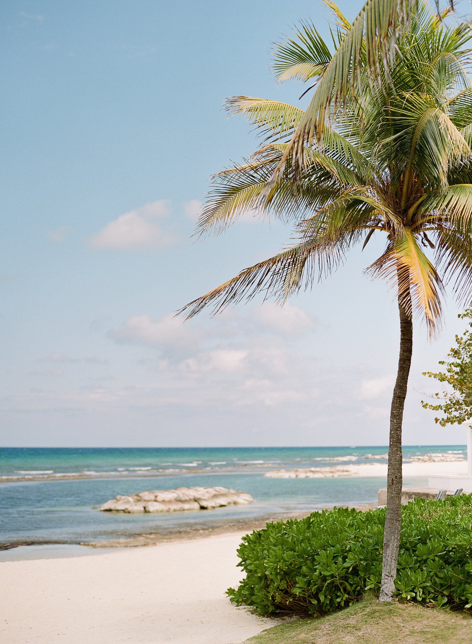 Palm trees on the beach in Montego Bay; Sylvie Gil Photography