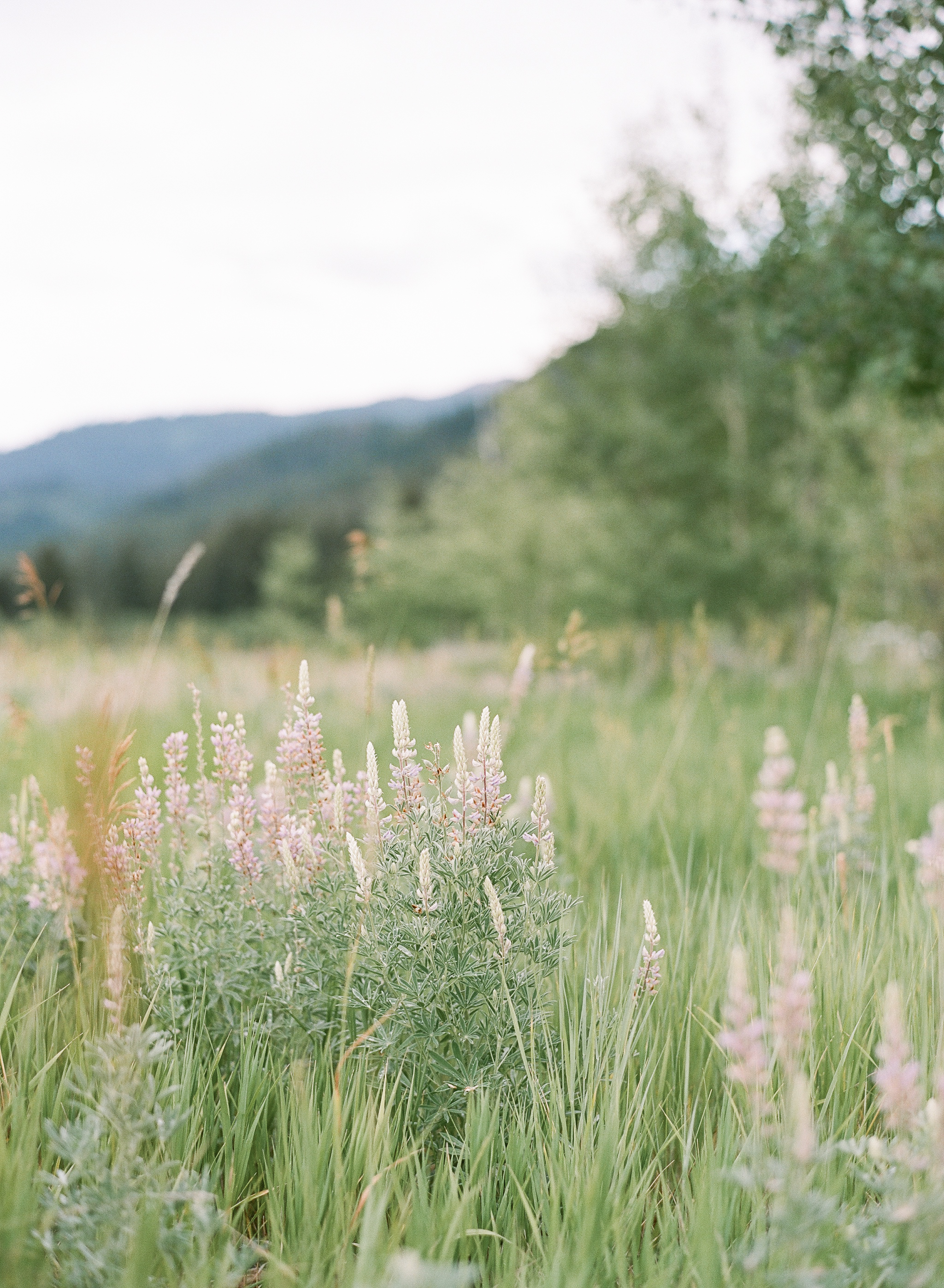 Wyoming pasture, wildflowers, Sylvie Gil Photography