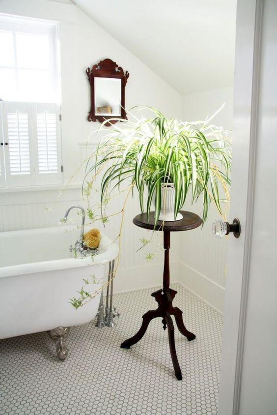 Modern Plant in Bathroom