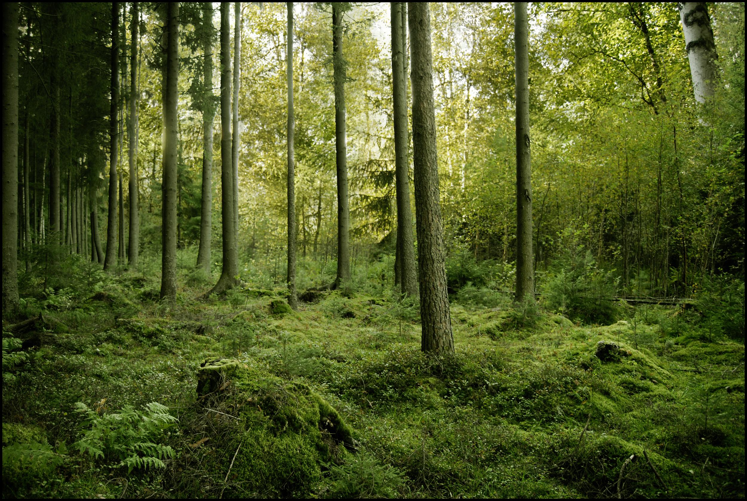 BG_Green_Woods_by_Eirian_stock.jpg