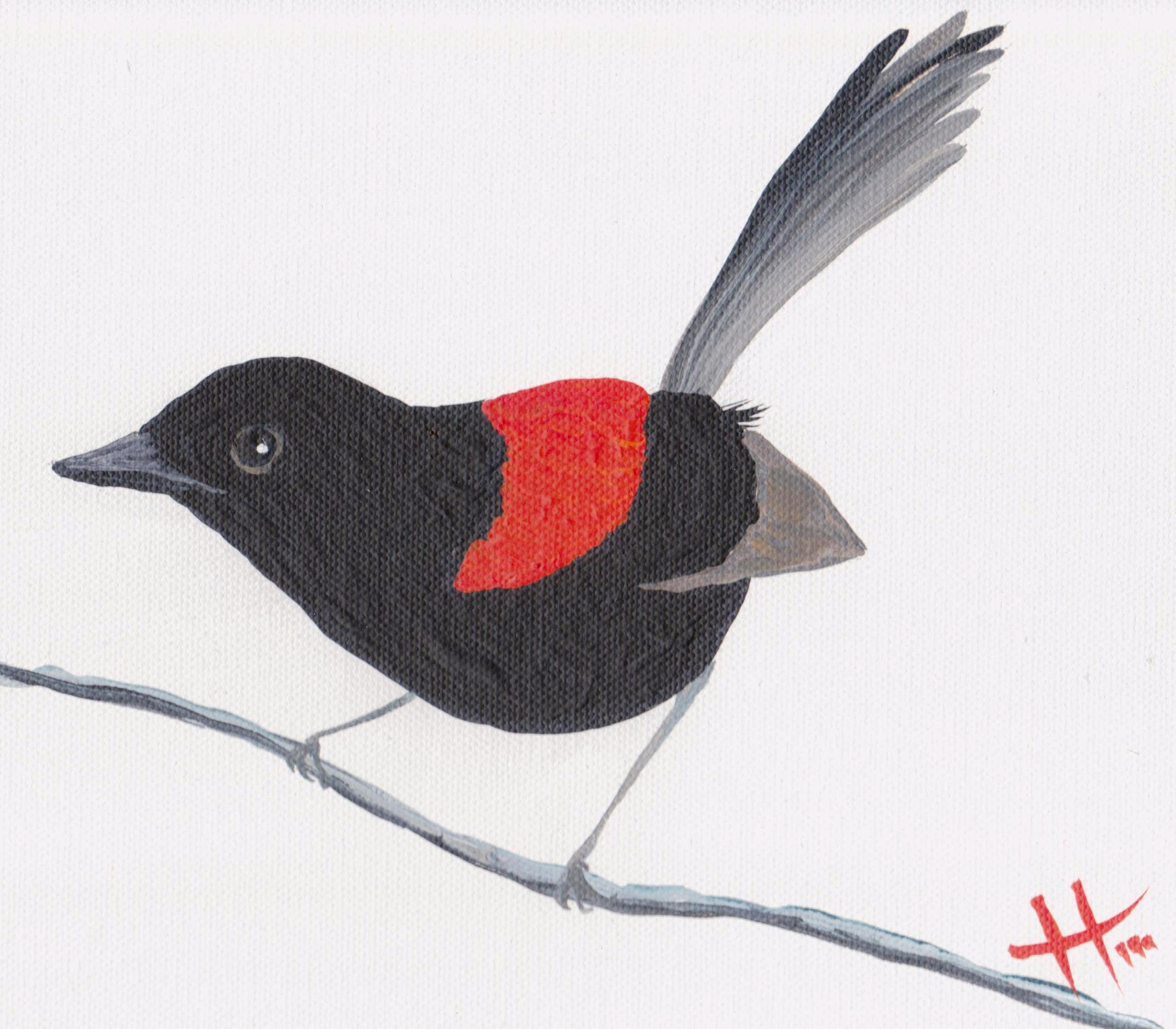 'Red-backed Fairy Wren'