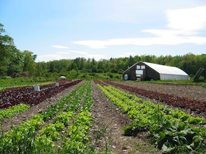 farm_field.jpg