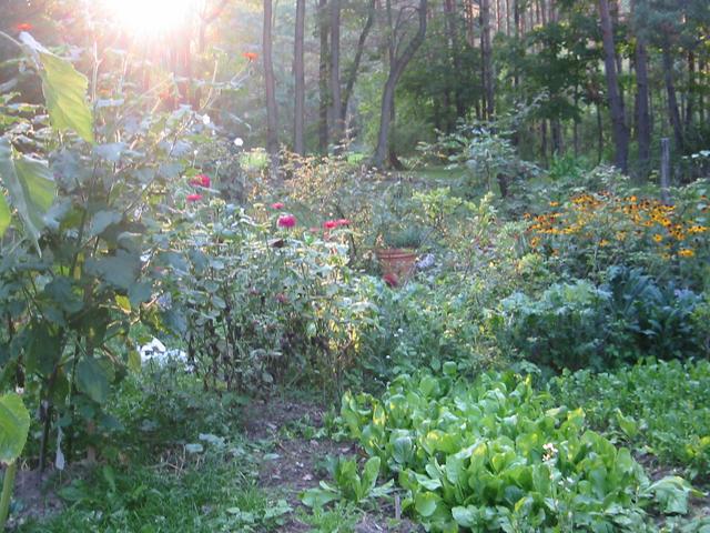 garden2008.jpg