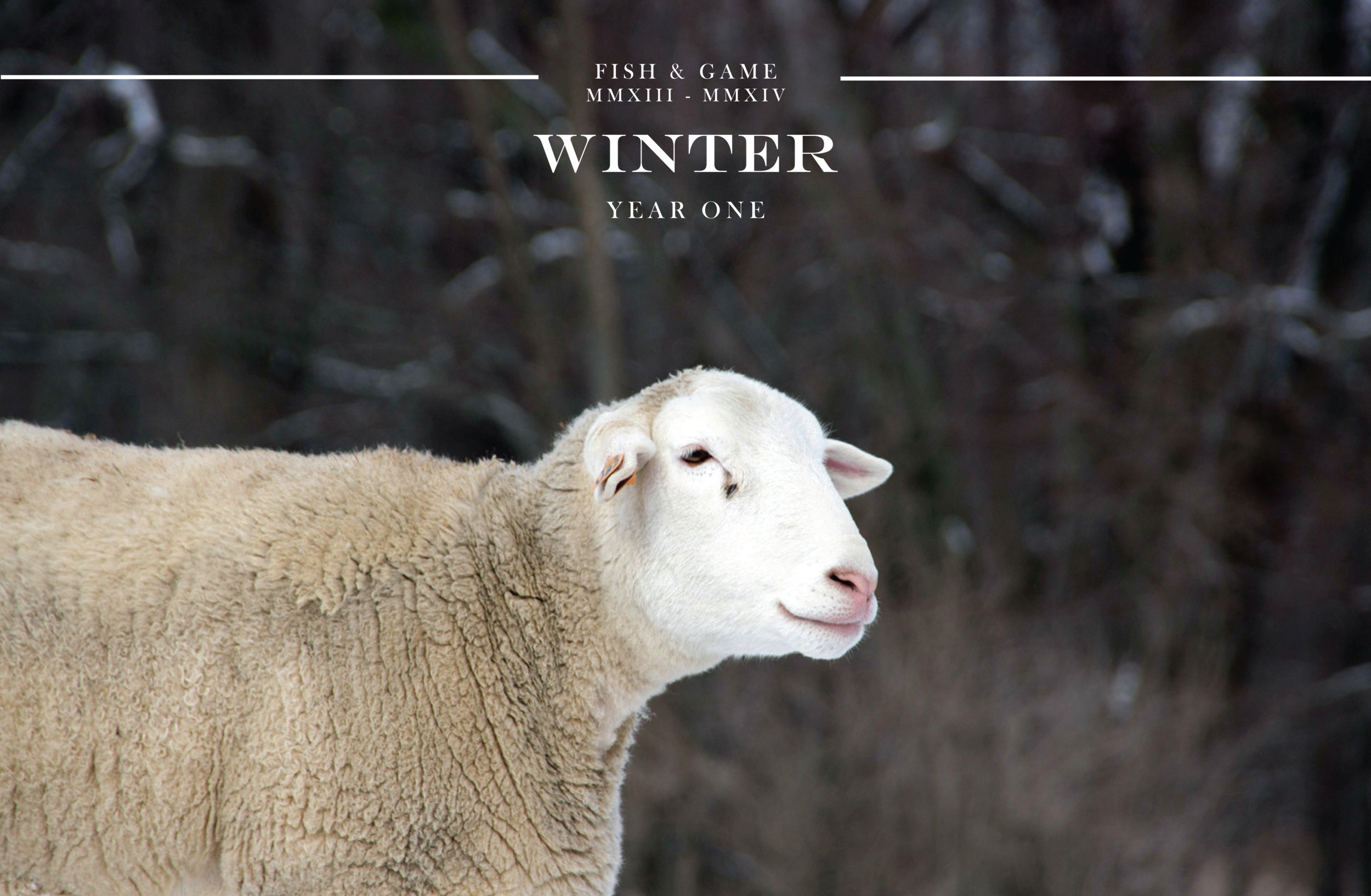click to view WINTER newsletter
