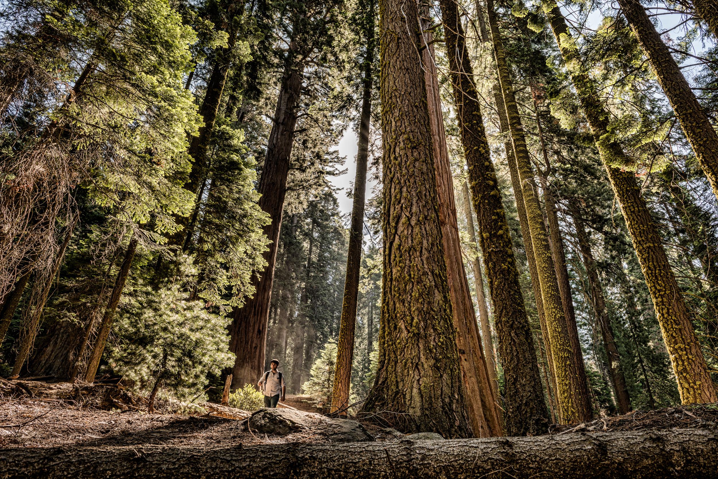 TP_Redwoods-0250-Edit-2.jpg