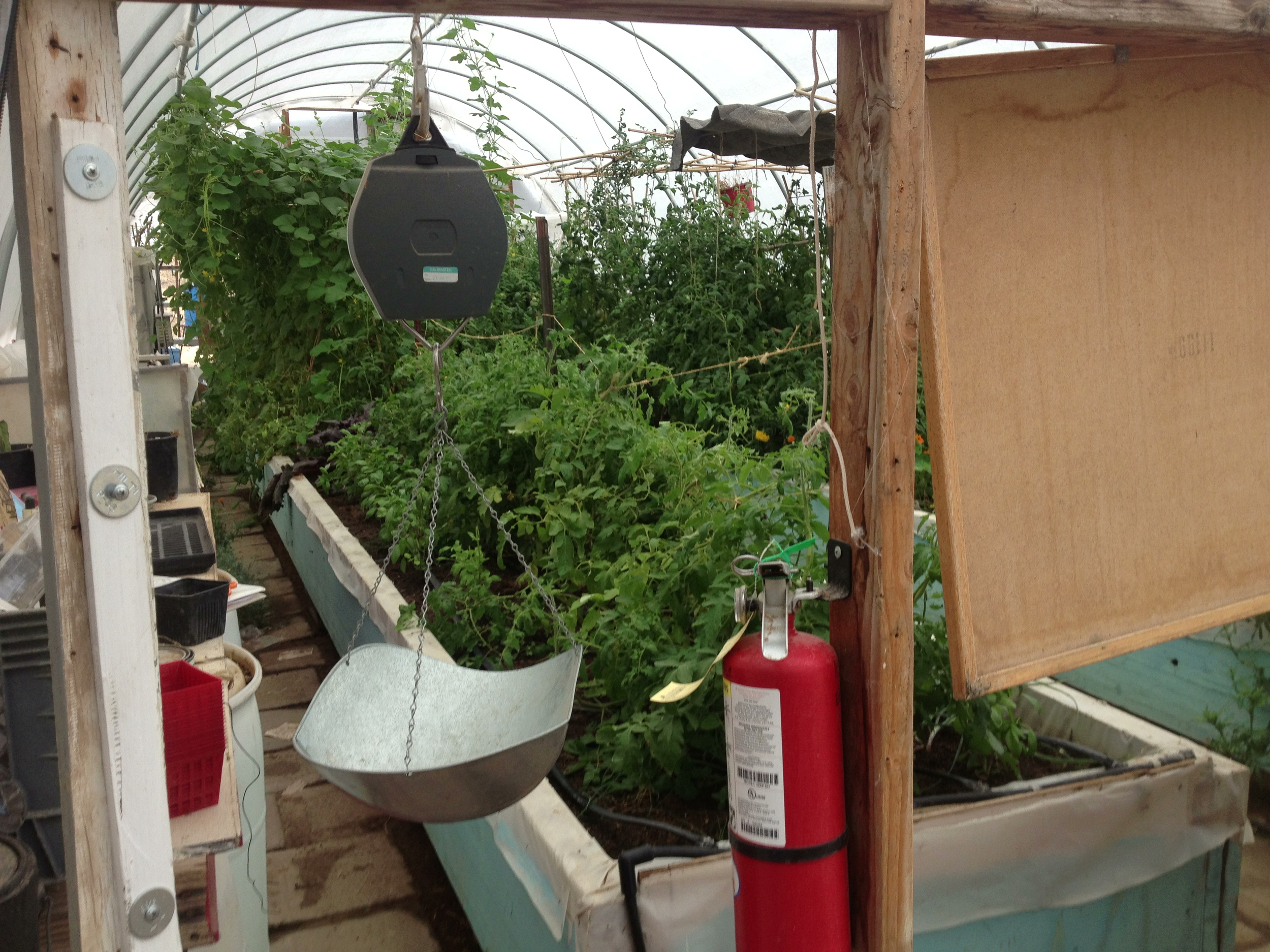 The lush interior of the test greenhouse.