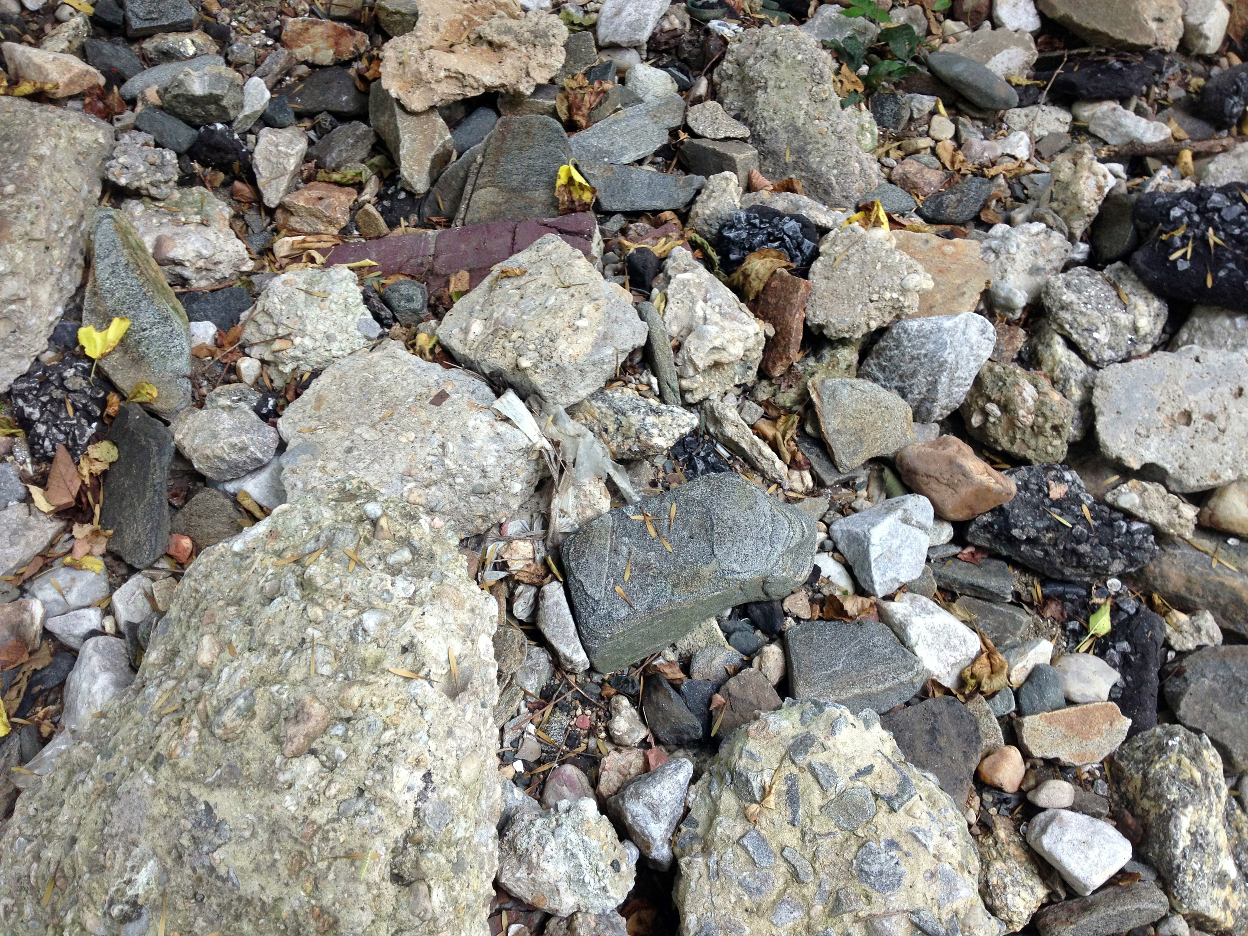 Geological sample of the beach. Not including trash, quite a diverse array.