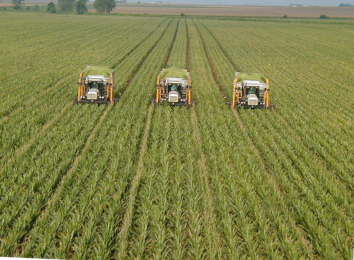 Monoculture corn: the cause of, and solution to, all of our food system's problems.  Via O Ecotextiles.