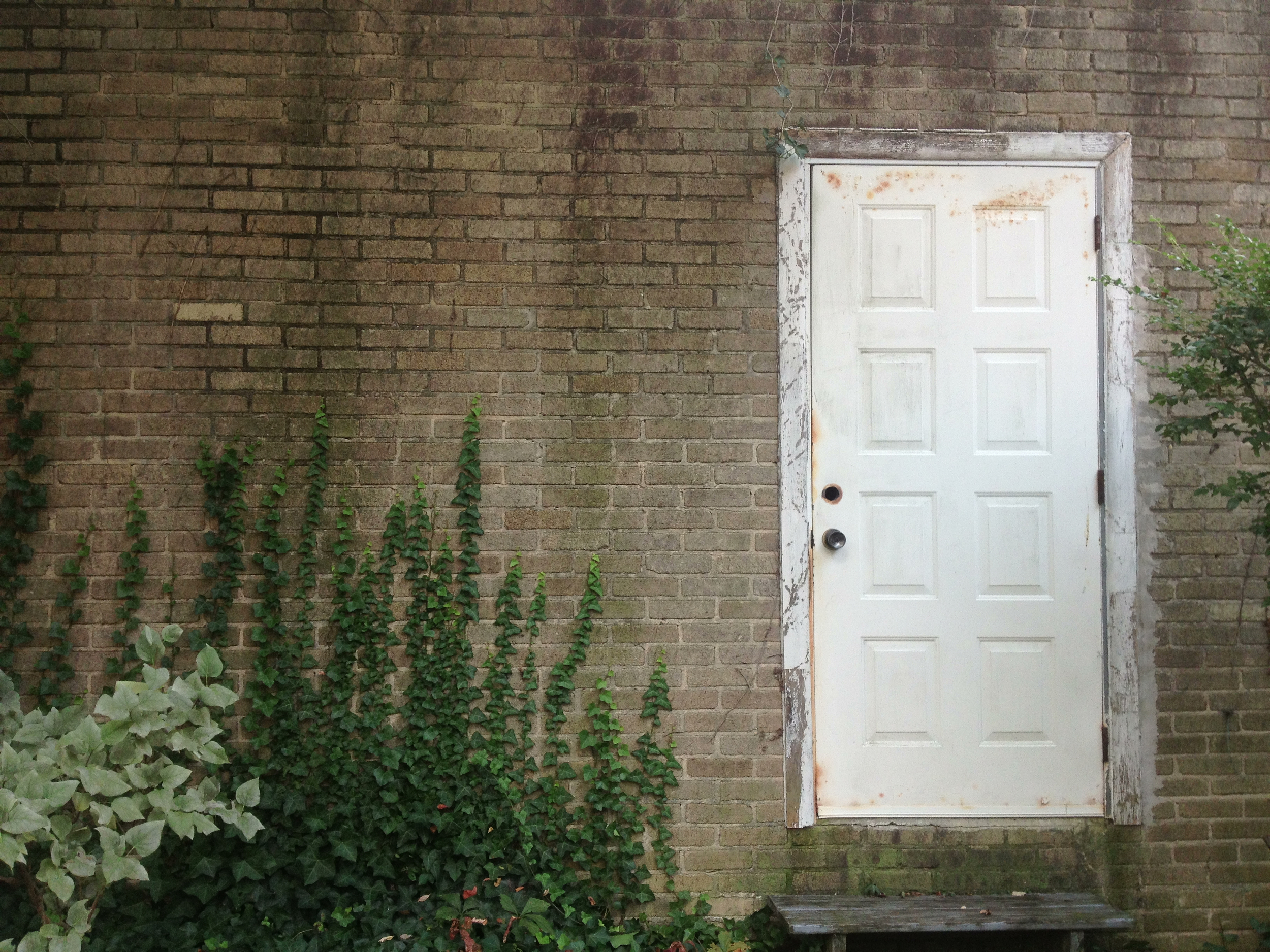 Still life with garage door and vines.