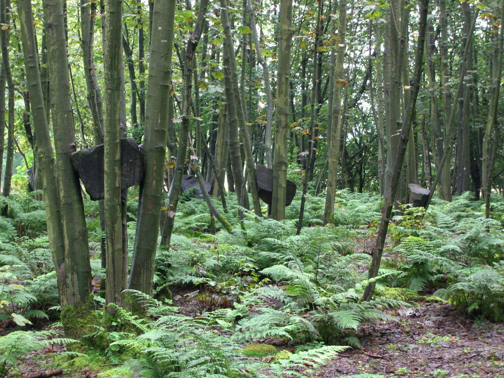 Stone Coppice , by my old favorite  Andy Goldsworth y. Coppiced trees were grown around boulders, lifting them up gradually over time.  Photo by Nic Rowley .