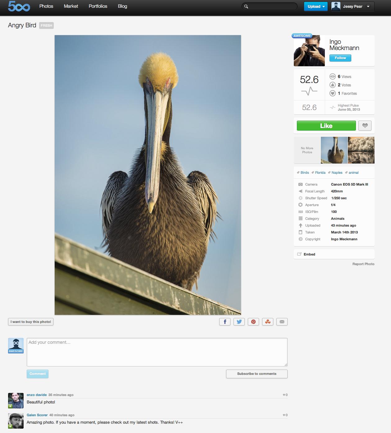 real-bird.jpg
