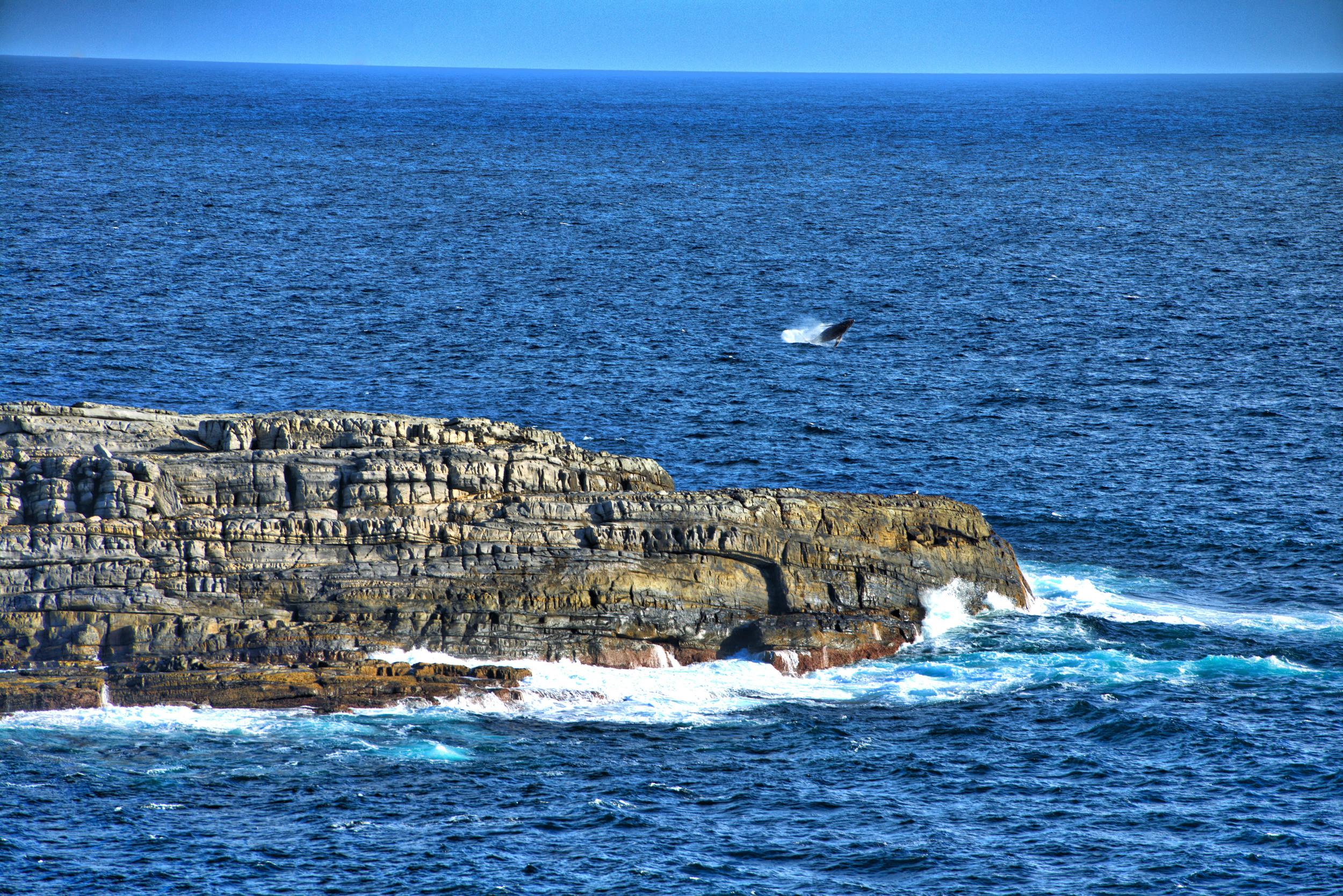 _CY12748 whale.jpg