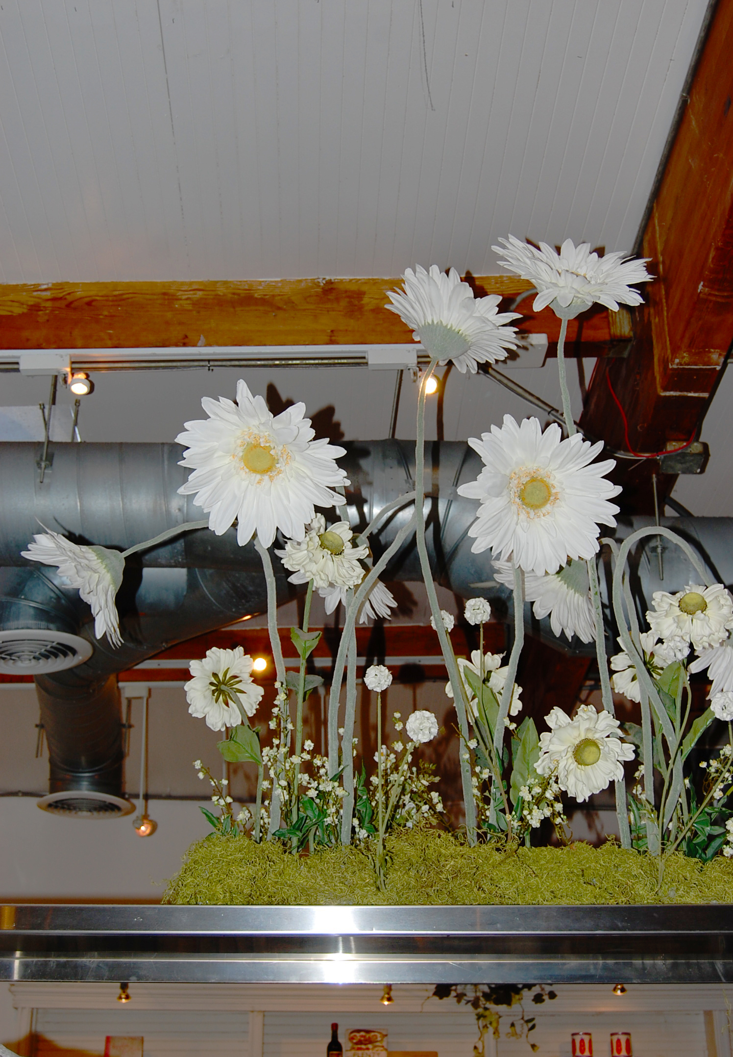 Try  GM Floral  for these lovely daisies....