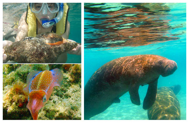 Snorkeling Tours Palm Beach Watersports