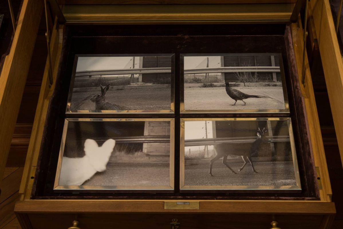 Sophie-Calle, «Liberdade vigiada», Museu-de-História Natural, 2019