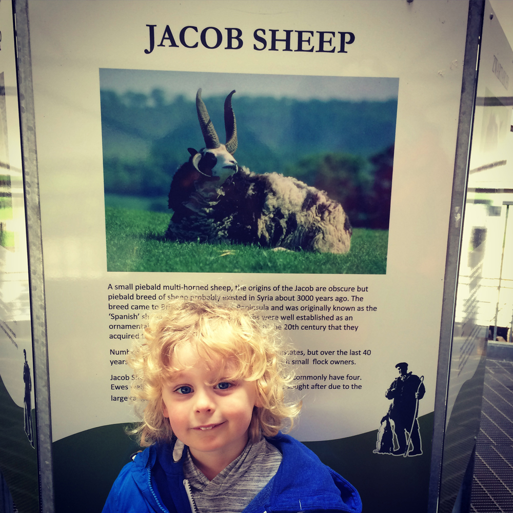 Our son Jacob and 'his' sheep!