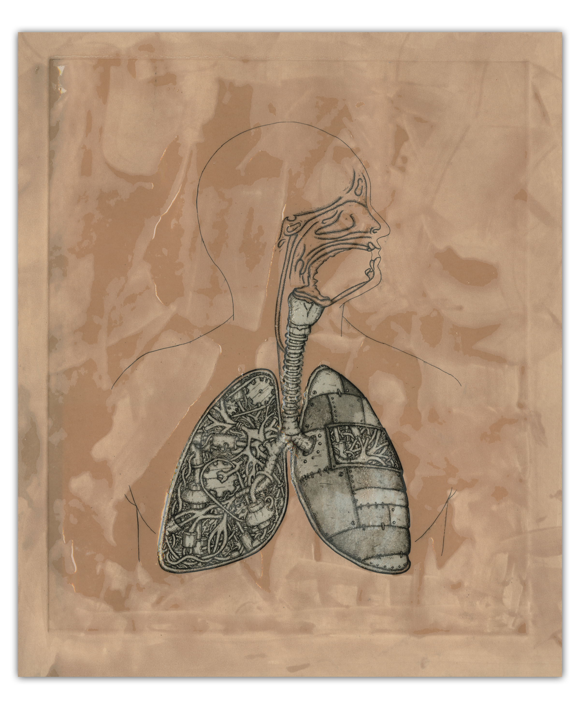 lung brown and blue.jpg
