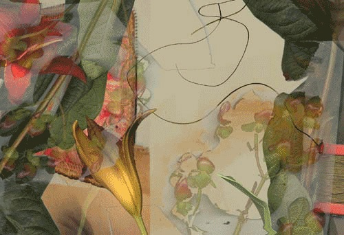 Lilies, 2003