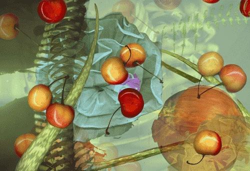 Cherries, 2003