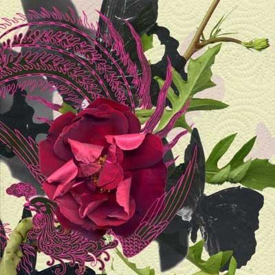 Rose Peacock, 2005