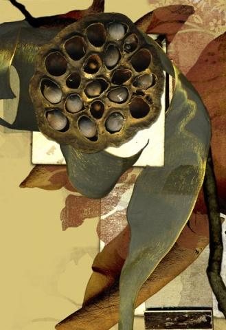 Lotus Seed, 2007