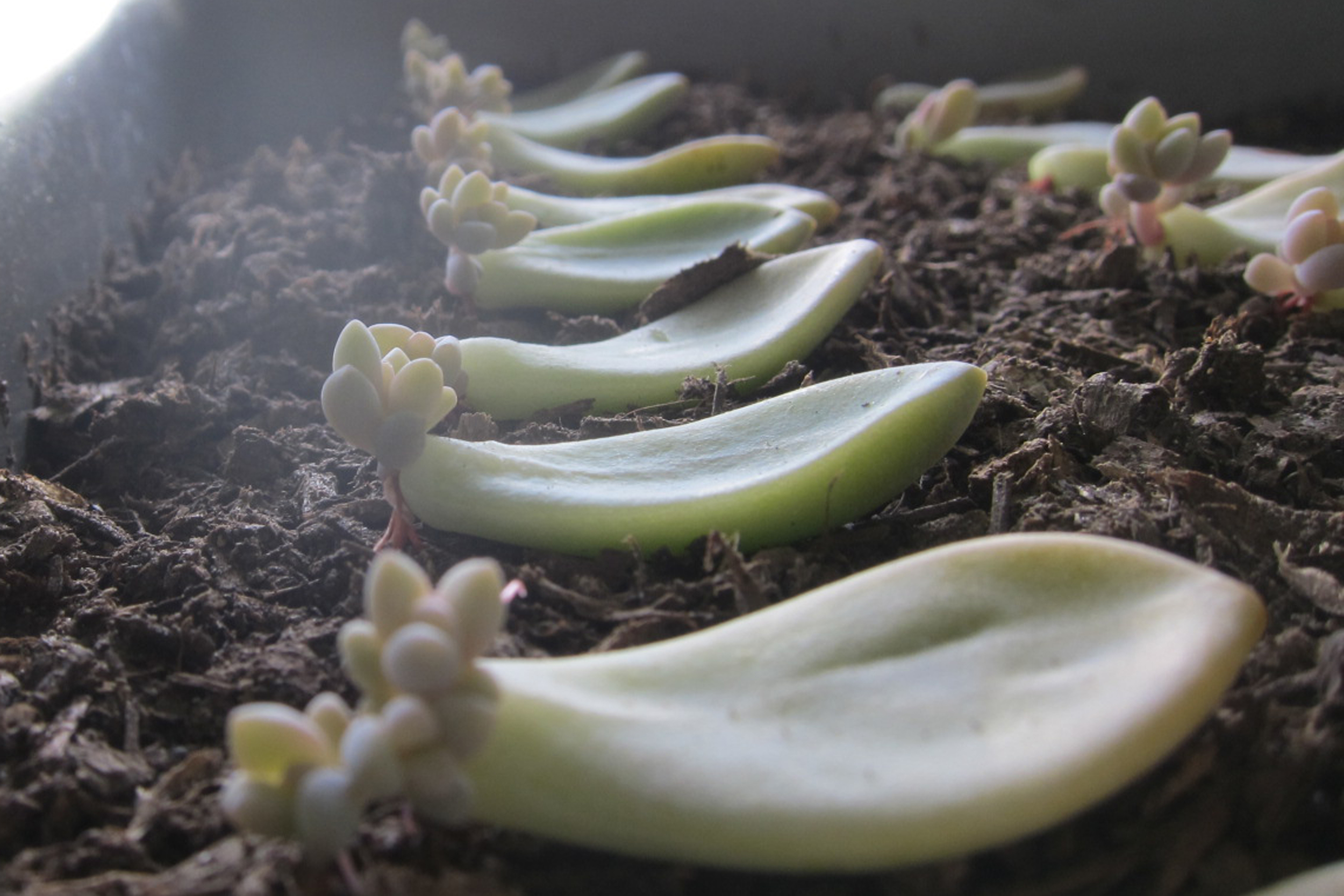 Propagating Succulents — Needles + Leaves