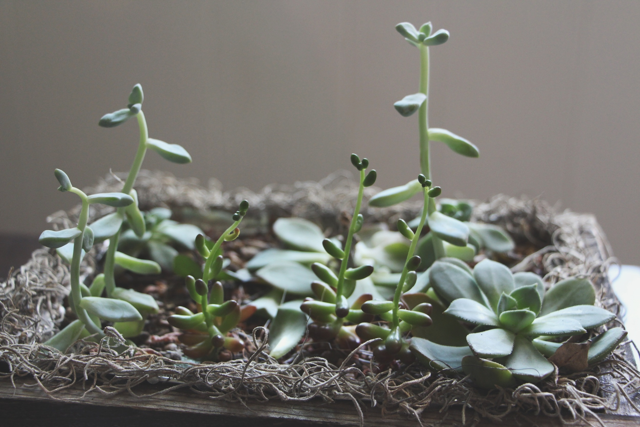 leggy succulent arrangement