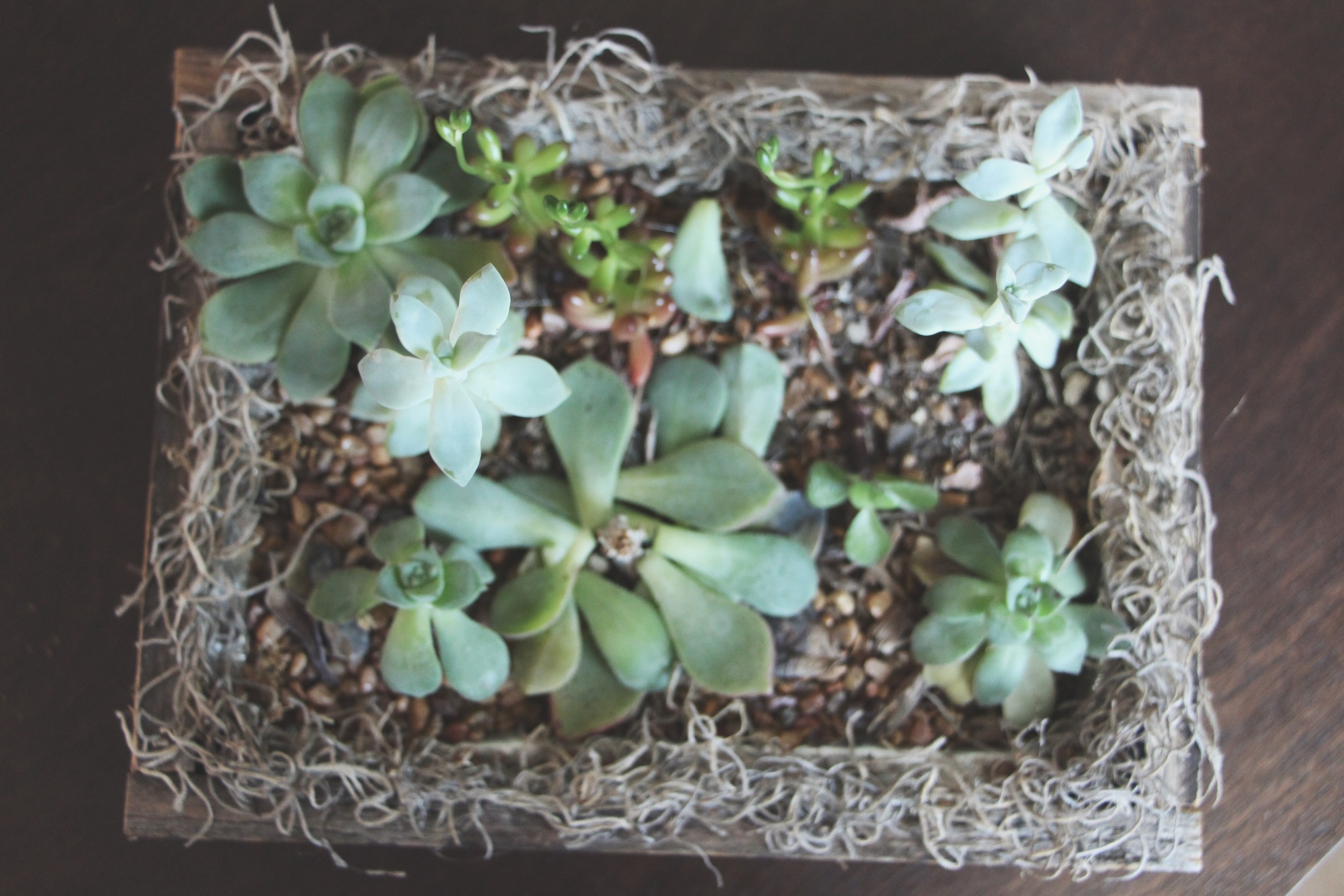 neglected succulent arrangement via needles + leaves